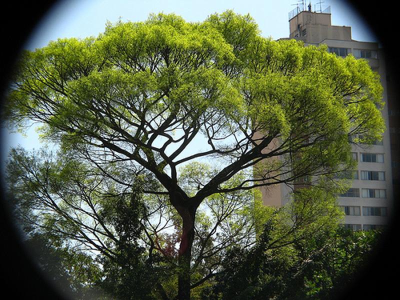 Seminário debaterá a arborização na cidade de São Paulo nesta quinta-feira